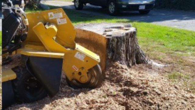 Where to find STUMP GRINDER in Framingham / Hudson